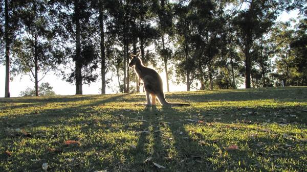 Lone Pine Park, QLD