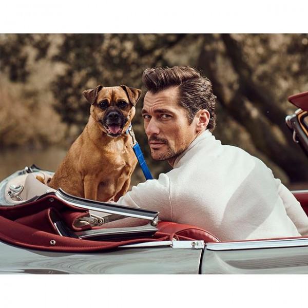 Dog Lovin' Gandy #4