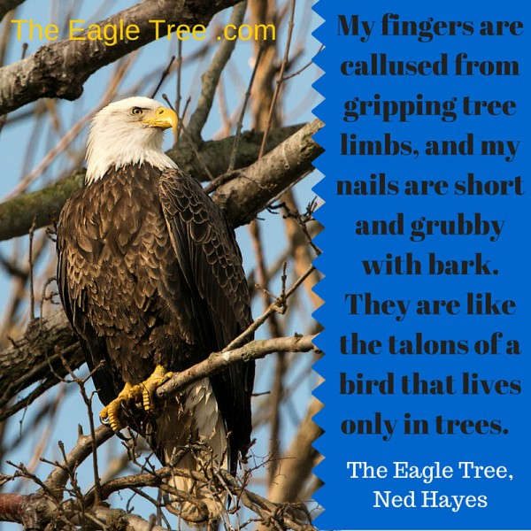 eagle tree quote