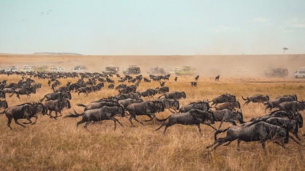 Book Serengeti National Park Safari Tanzania