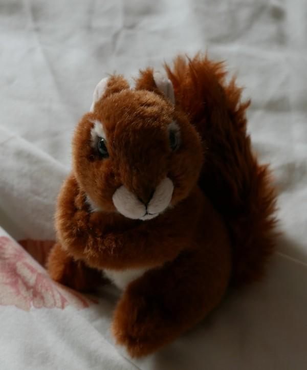 Scarlett, the Red Squirrel!