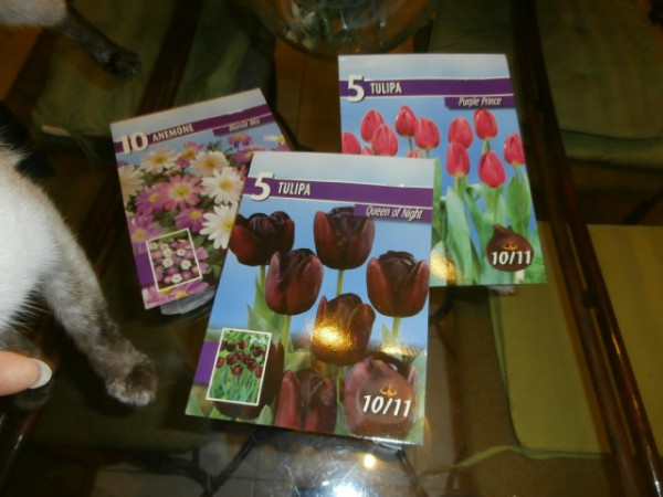 Tulip bulbs that I bought a couple days ago