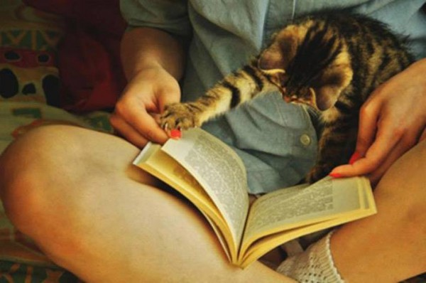 Even cats want to read :))
