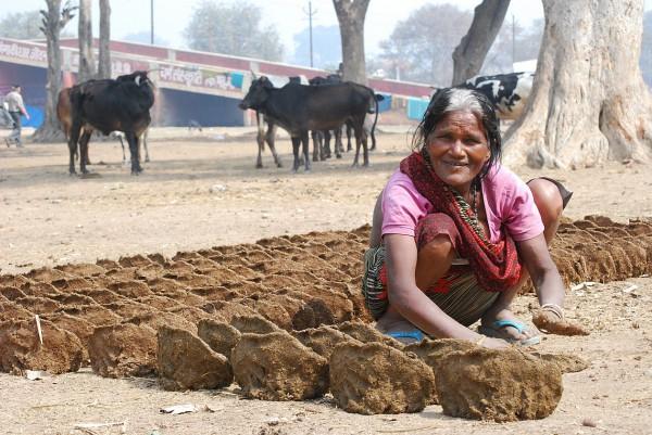 Formowanie placków z krowiego łajna (Allahabad, 2012 r.)