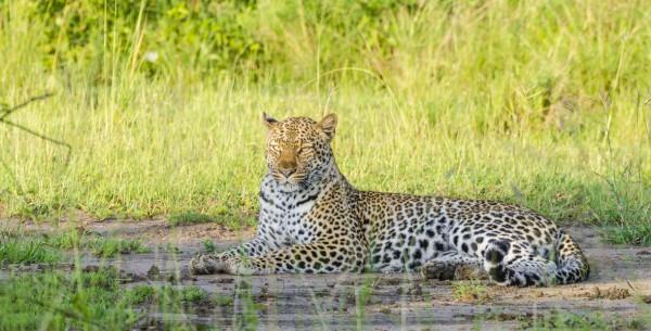 Find best African safaris tours