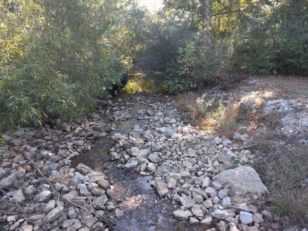 sunlight on the creek