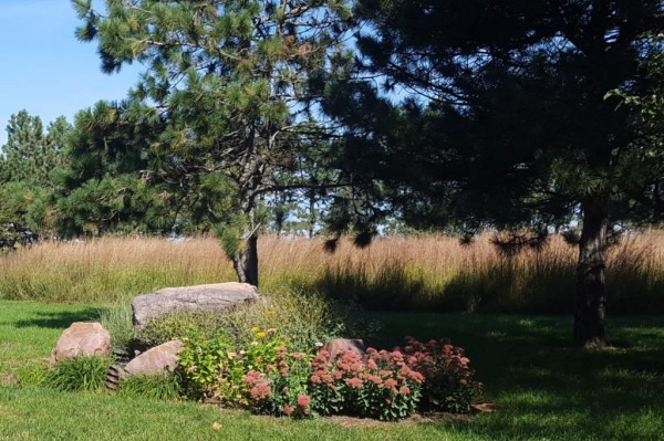 Using Stone in the Landscape - Evergreen Trees