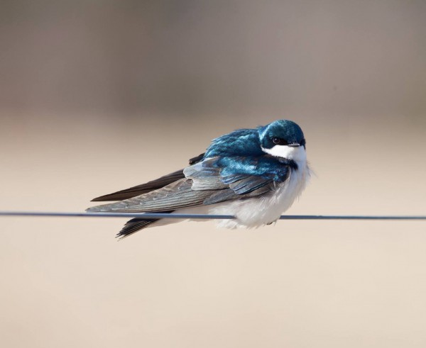 One swallow doesn't make a summer...