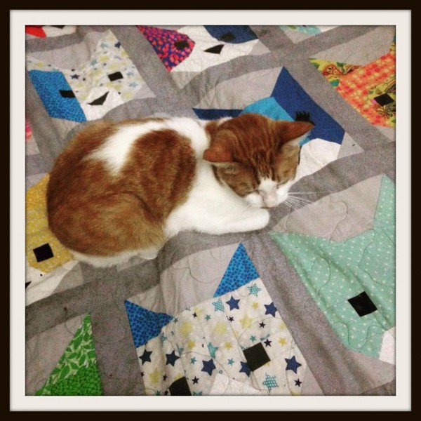 Cat on a cat quilt!