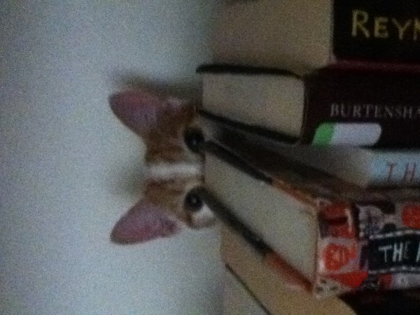 Someone likes my books...