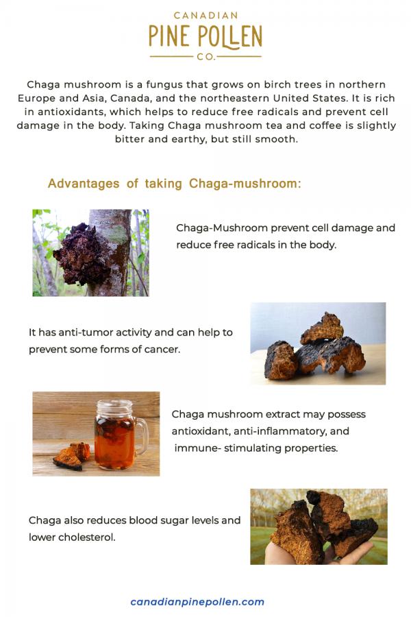 Advantages and Health Benefits of Chaga-Mushrooms