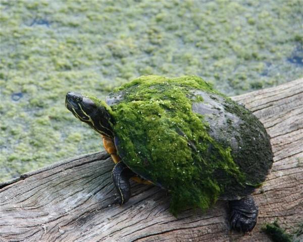Mutant hero ninja turtle