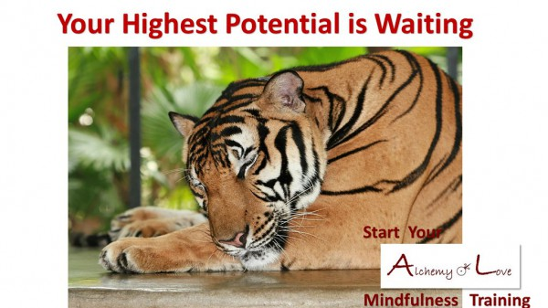 Your Highest Potential is Waiting
