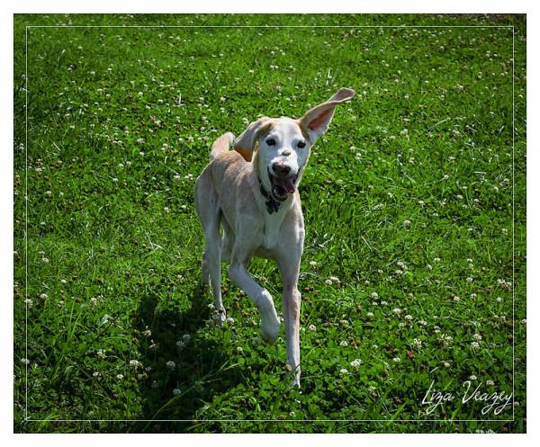 Dog joy!
