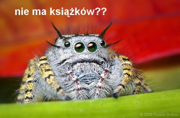 Smutny pająk jest smutny...