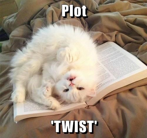 I haven't decided if cats are avid readers, or very against it.