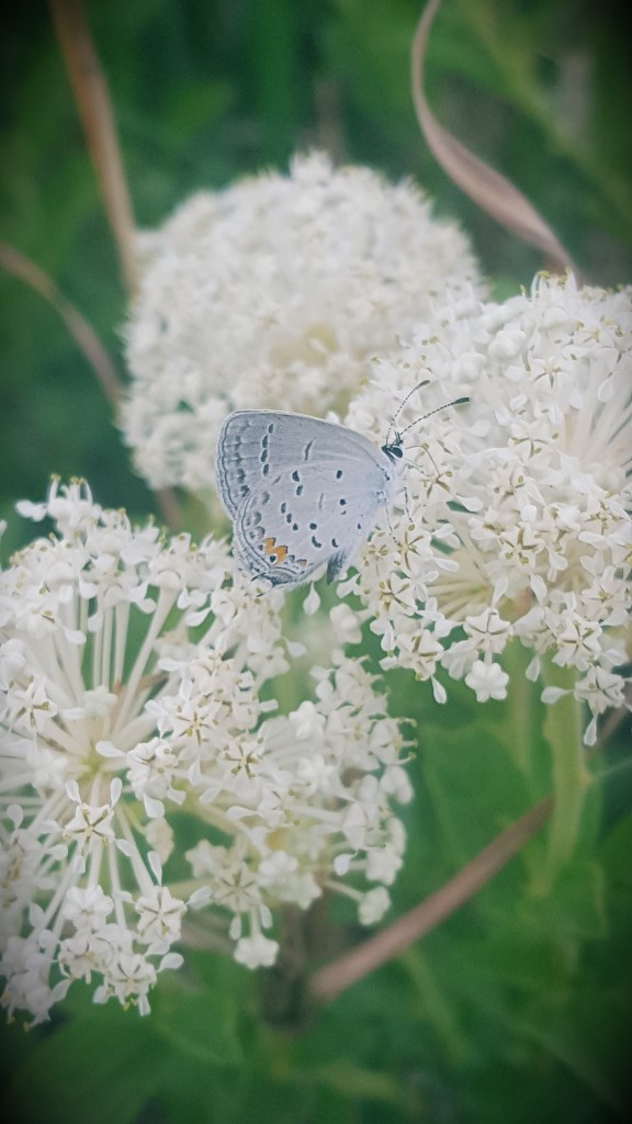 Best Pollinator Perennials For April - May