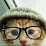 Why has my nerdy kitty disappeared from my replies?