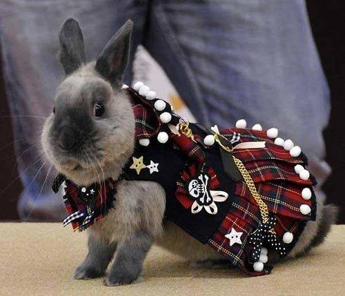 Q: What do you call a bunny in a kilt? A: Hopscotch.