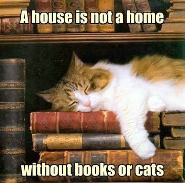Cats & Books !
