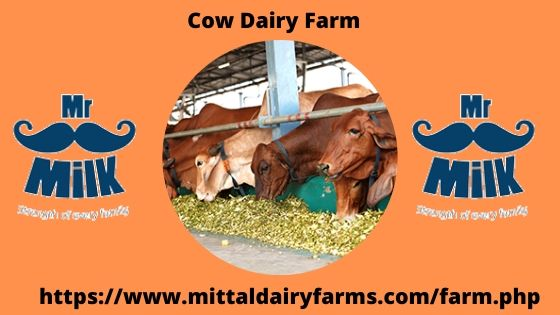Cow dary farms