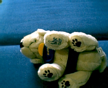 Guide-dog puppies have special paws.