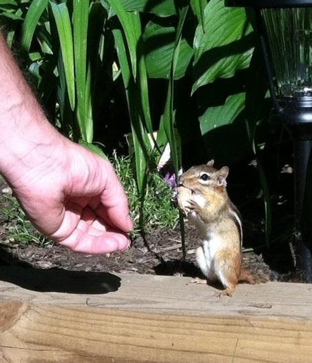Chipmunk refusing to share his peanut