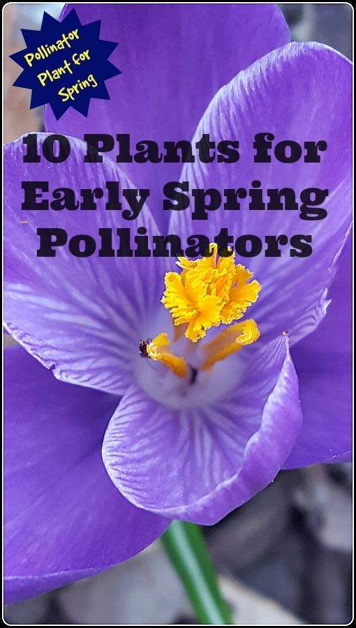 Early Spring Flowers At Online Garden Center