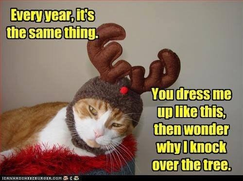 May your cats be merry...