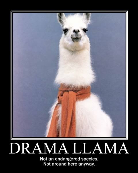Dont Feed The Drama Llama the   bullying reviewers