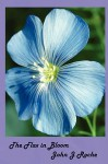 The Flax in Bloom - John Roche