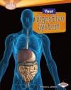 Your Digestive System (Searchlight Books) - Rebecca L. Johnson