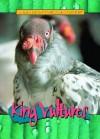 King Vultures - Jim Redmond