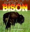American Bison - Ruth Berman