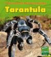 Rainforest Animals: Pack B - Anita Ganeri