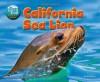 California Sea Lion - Jen Green