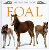 See How They Grow: Foal - Mary Ling
