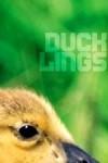 Ducklings - Aliya Whiteley