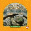 Why Animals Live in Shells - Valerie J. Weber, Susan Nations, Debra Voege