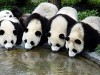 Travel to China: The Beauty of China - Simon Wu