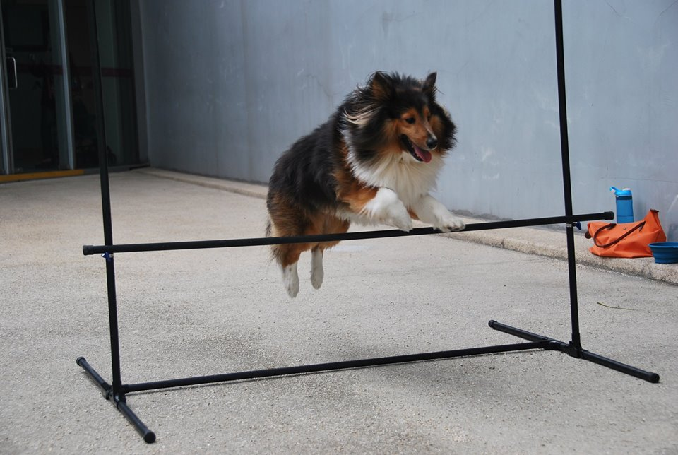 Training your Dog was never this much Fun - doglistenerconsult